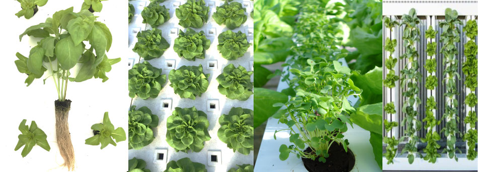 Four Images Aquaponic Hydroponic Growing Systems